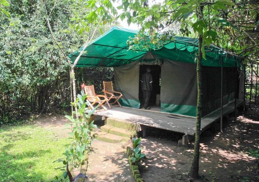 Wagtail Safari Camp