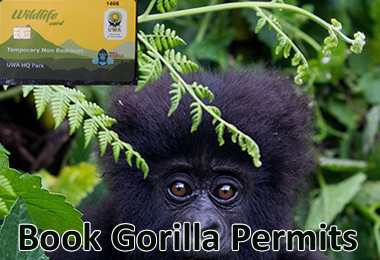 Gorilla Permit Booking