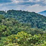 Bwindi Forest Canopy