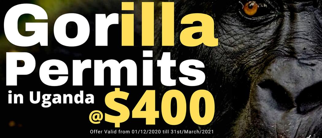 Gorilla Permit Cost