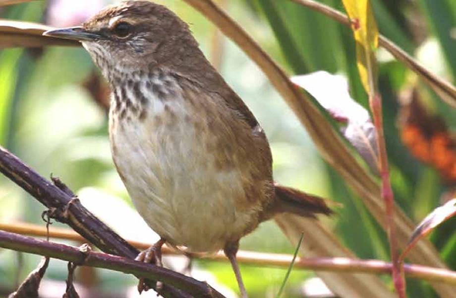 Echuya Birds