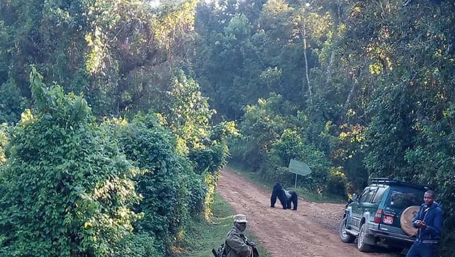 Self Drive in Bwindi