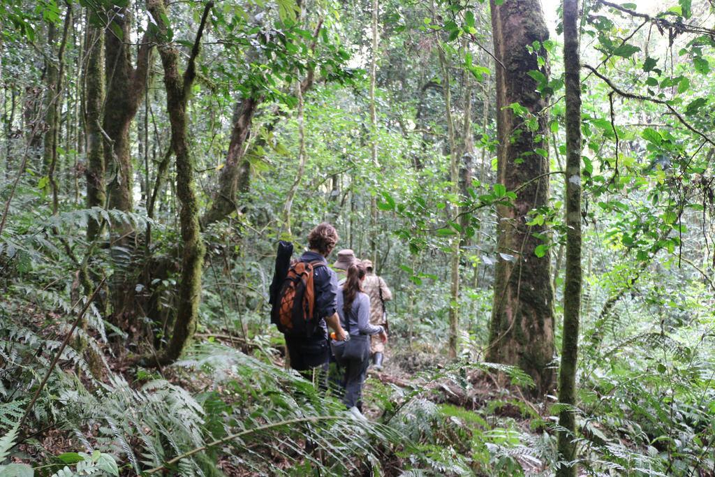 Gorilla Walking Safari